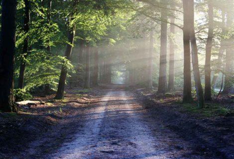 Land- und Forstwirtschaftsflächen